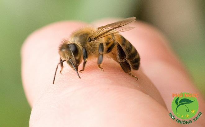9 cách trị ong đốt hiệu quả