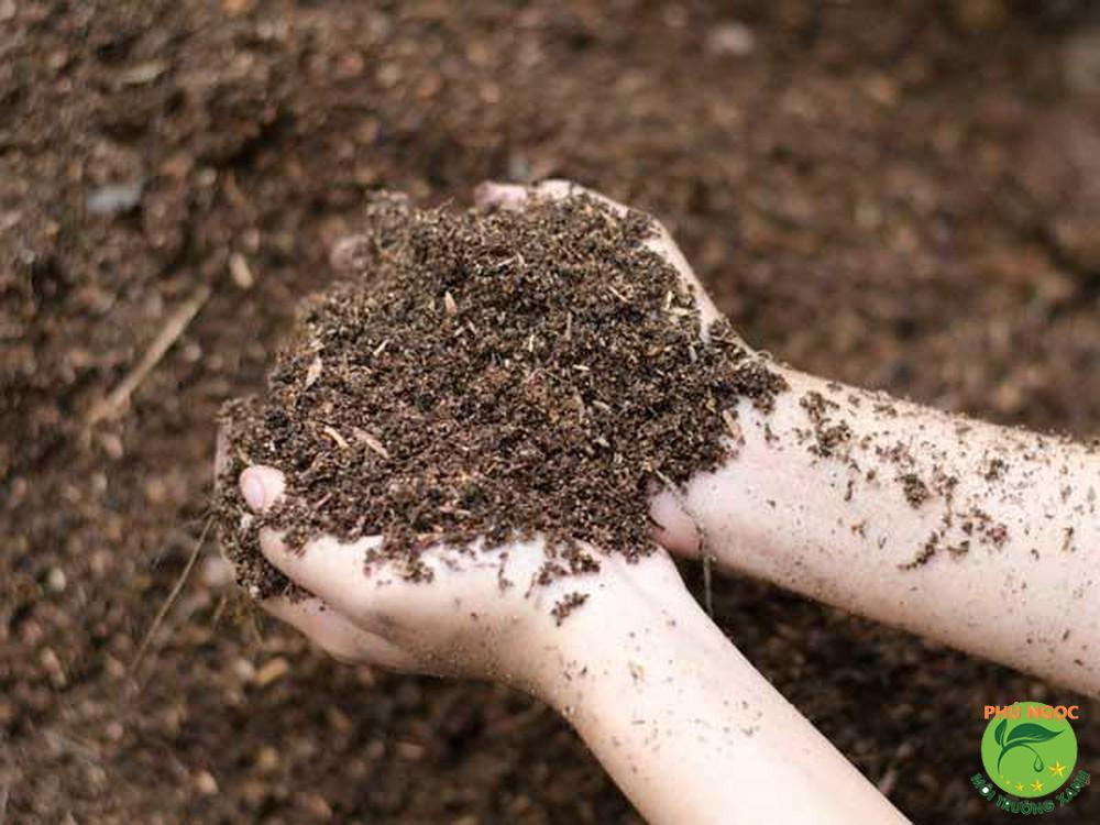 Bùn sẽ giúp giảm đau vết ong đốt