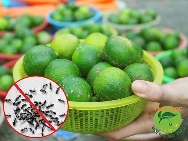 Chanh - Mẹo diệt gián và kiến