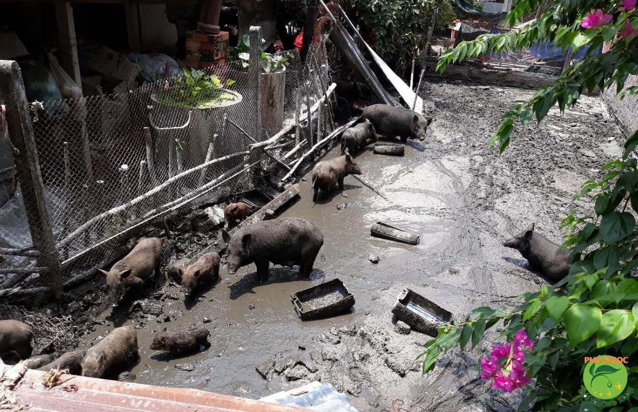 Dịch vụ hút hầm phân heo tại Phú Ngọc