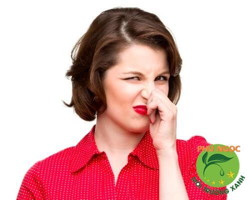 Mùi hôi khó chịu từ đường ống, cống thoát nước hay nhà vệ sinh