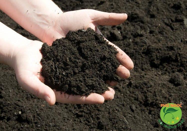 Đất gắn bó mật thiết với sự tồn tại và phát triển sinh vật
