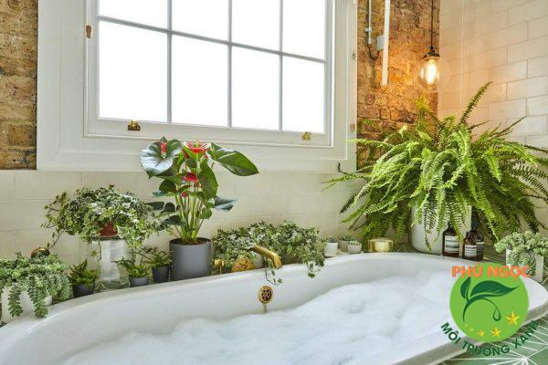 Trồng cây trong nhà vệ sinh giúp thanh lọc không khí, khử mùi hôi