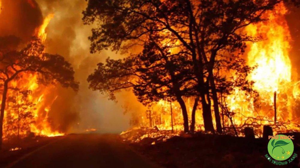 Cháy rừng cũng là nguyên nhân dẫn đến tình trạng ô nhiễm nhiệt