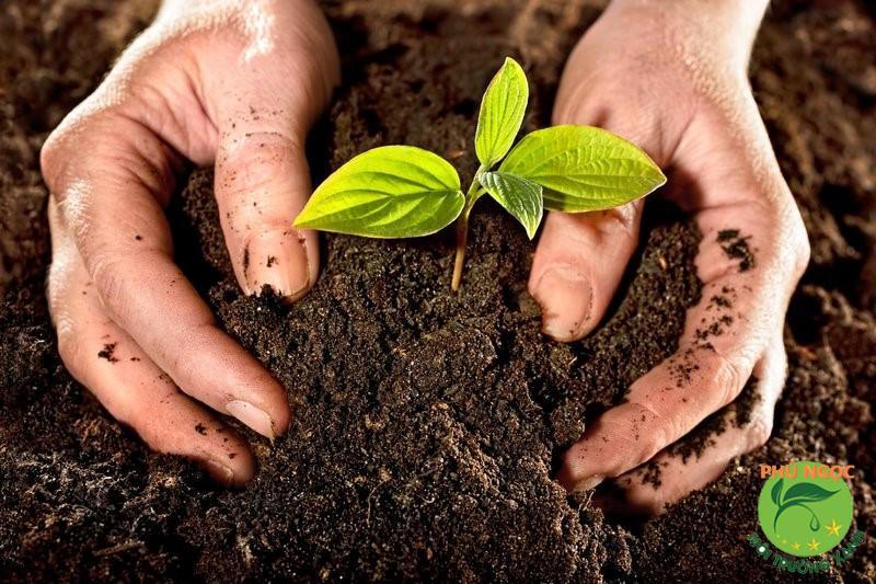 Trồng cây để bảo vệ môi trường tự nhiên